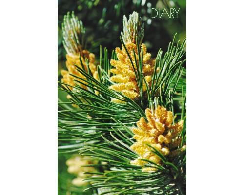 Ежедневник (недатированный) А5 112 листов Хвойный лес